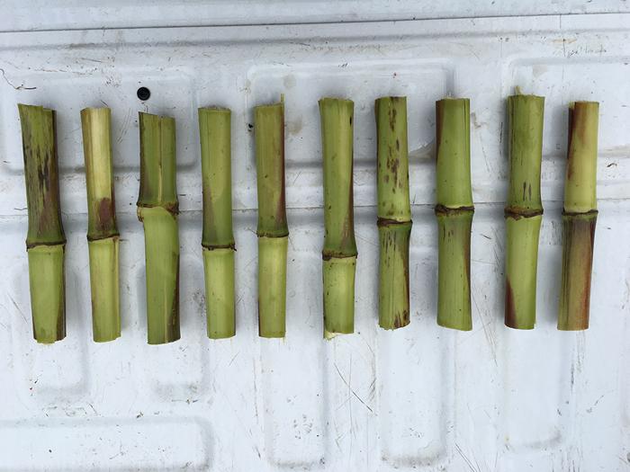 cut-stalks2