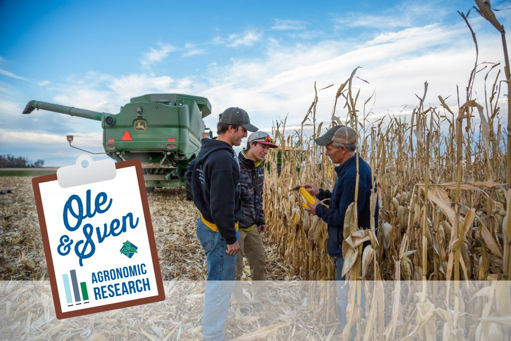Corn Population_Harvest