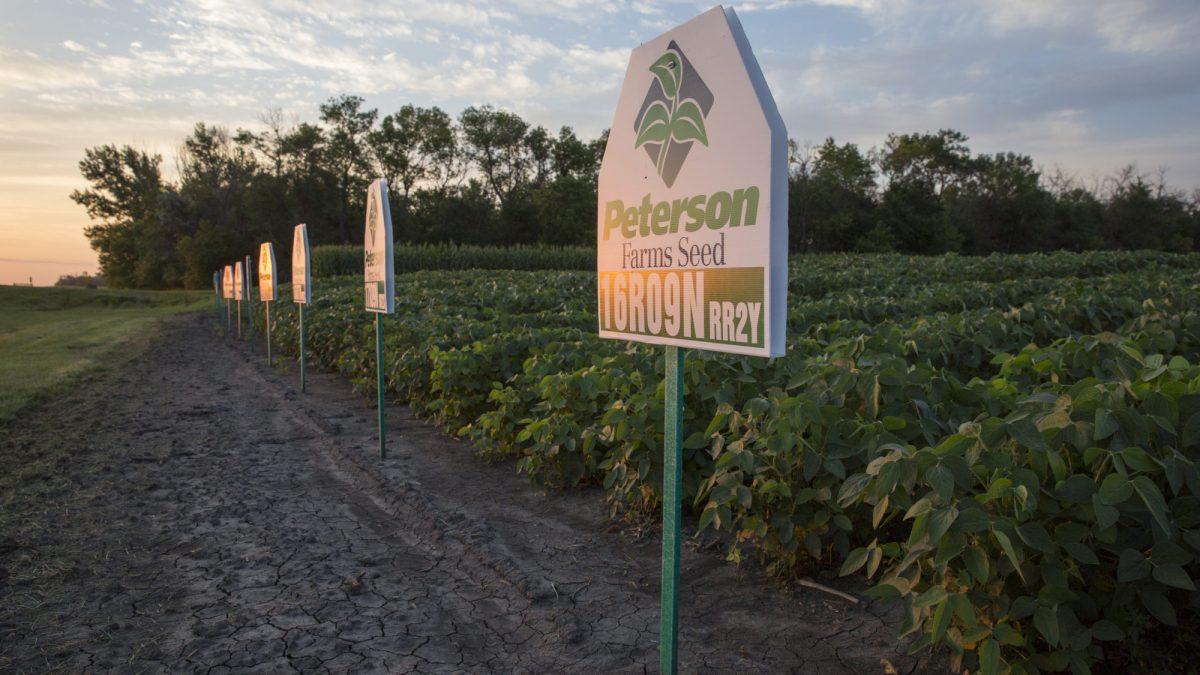 Soybean Traits