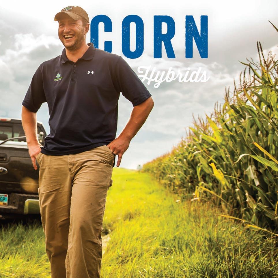 Corn Hybrids