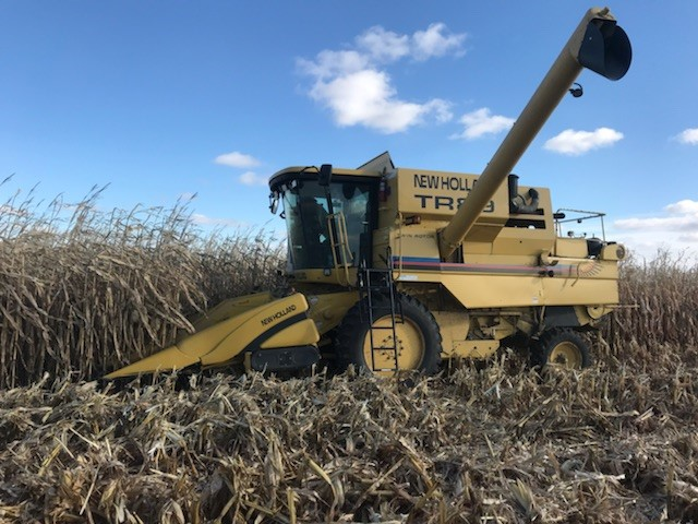 research corn harvest replicated
