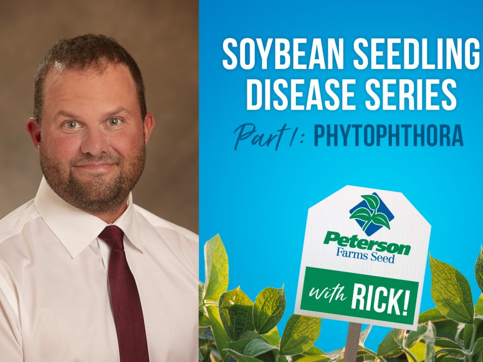 Phytophthora Soybean Seedling Disease
