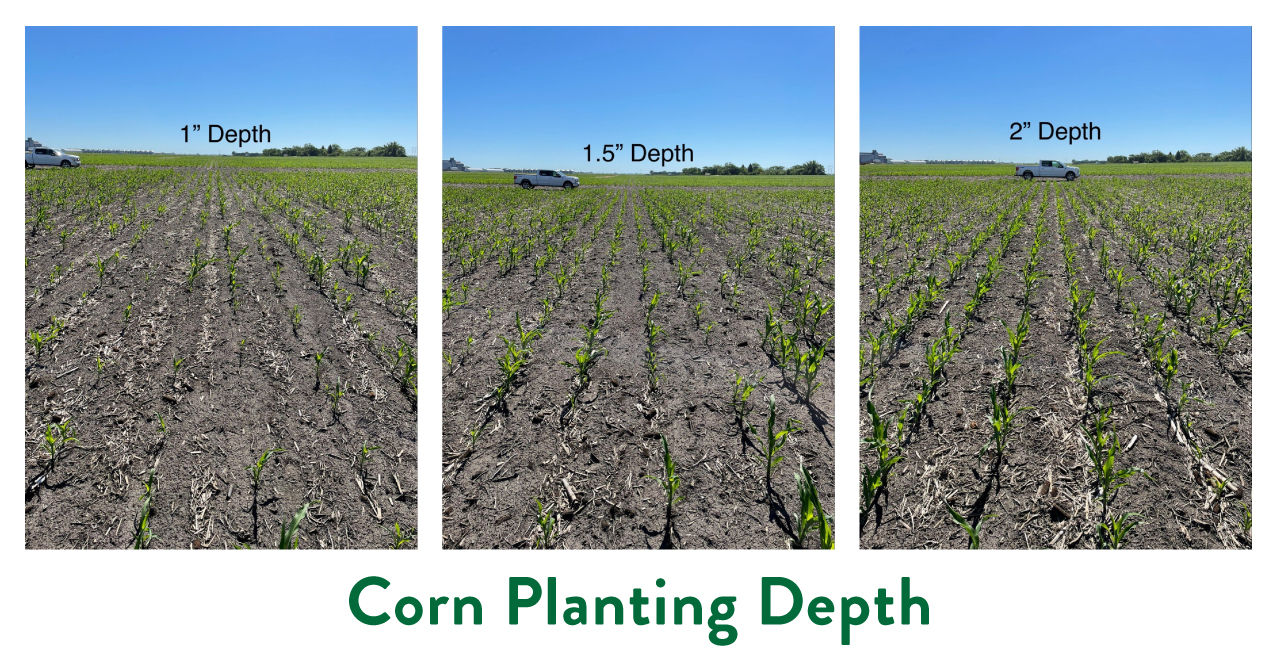 Different corn planting depth during drought and freeze