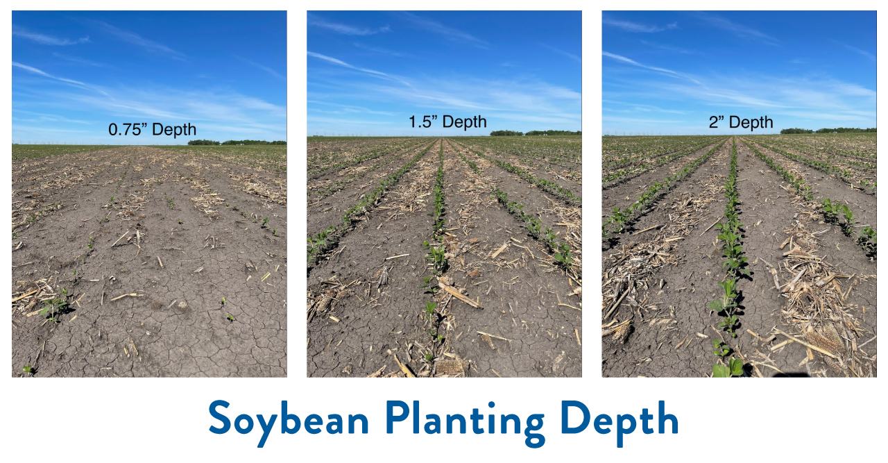Different soybean planting depth during drought and freeze